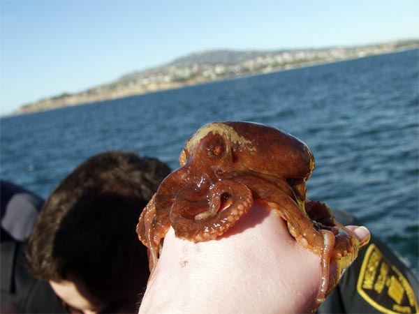 Octopus on my hand!