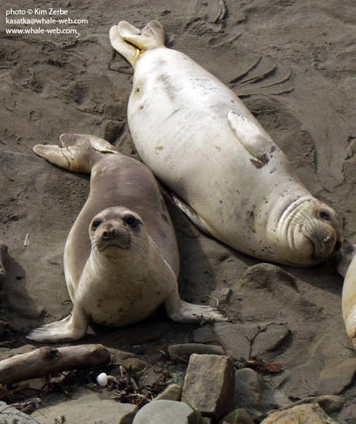 Two young seals found us interesting.