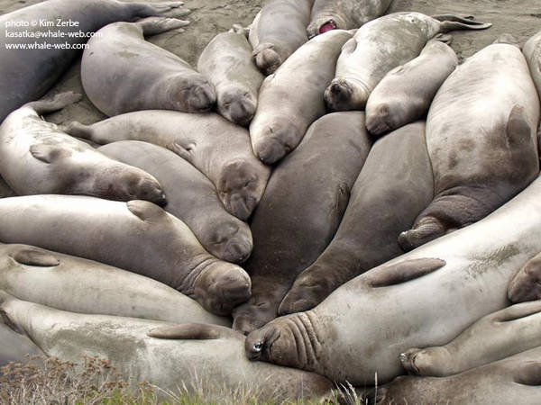A pile of young males napping