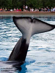 Highlight for Album: Marineland Canada