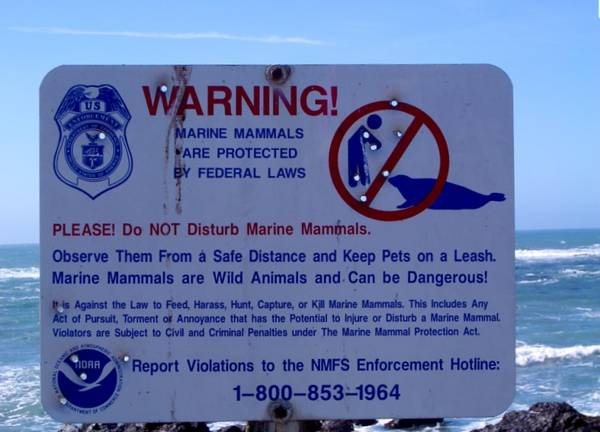 Marine Mammals are Wild Animals and Can be Dangerous!