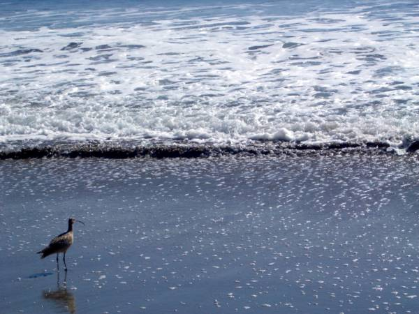 Ocean & bird with very long beak.