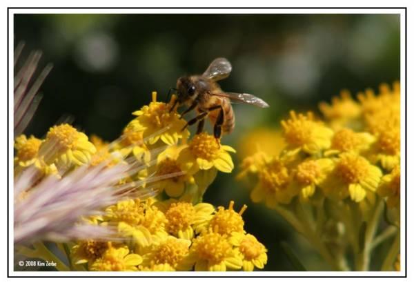 A bee =)