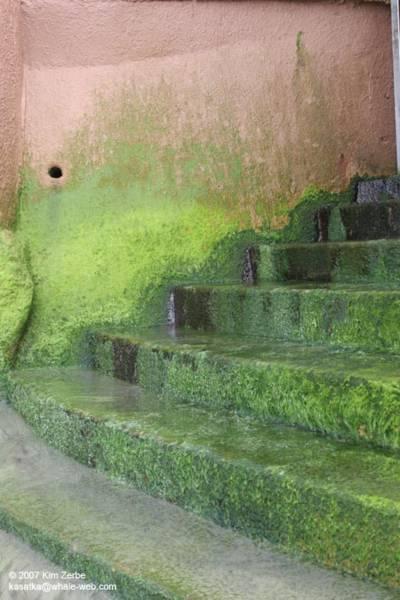 Stairs in La Jolla - July 2007