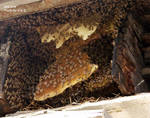 Bee hive in the golf building