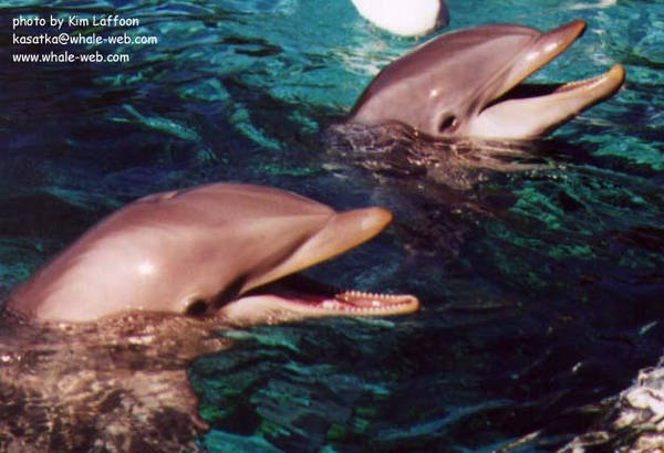 two-phins.jpg