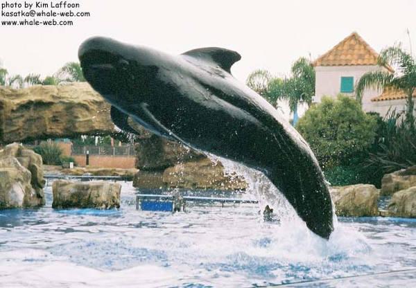 pilotwhale-bow.jpg