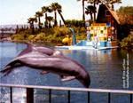 dolphinsa