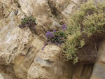 Flowers growing on the cliffs