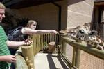 Me feeding a giraffe
