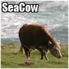 seacow